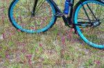 Пока они мелкие Цветы под колесами